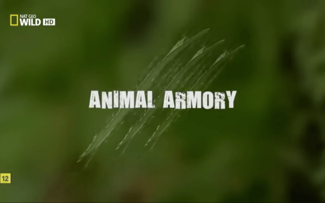Animal Armony (Documental Nat Geo Wild)